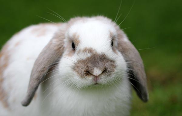 Bunny Rabbit Rescue Bath
