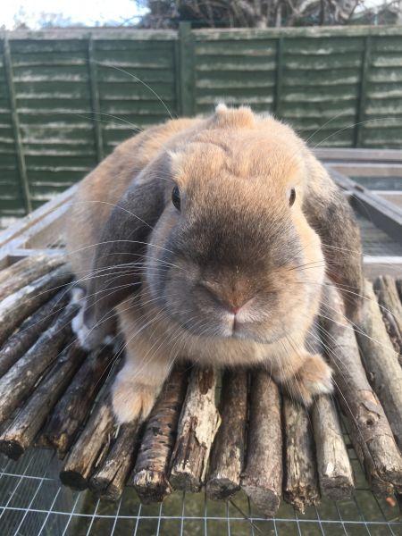 alfie the bunny
