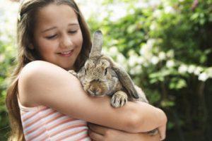 rabbit bonding advice