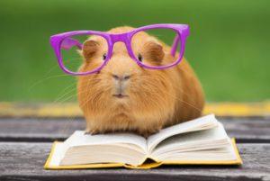 smart guinea